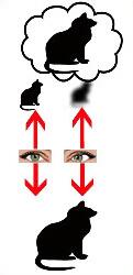 От глазного давления повышается артериальное давление